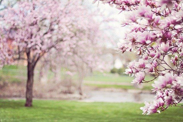 Spring tress